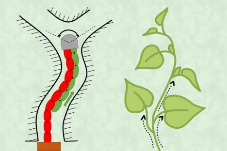 """Un robot flexible pero robusto está diseñado para """"crecer"""" como una planta"""