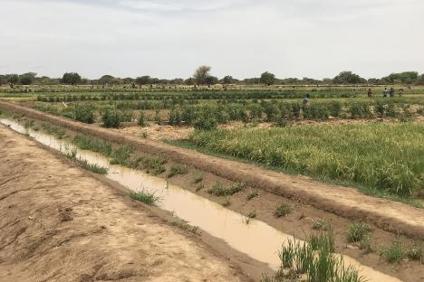 Colaborando para soluciones de acceso al riego: donde se encuentran la política y la ingeniería