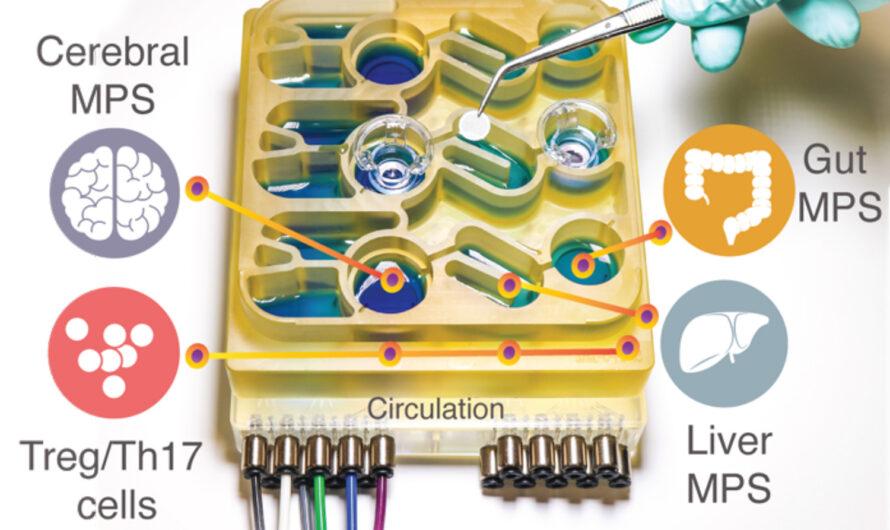 Nuestra conexión intestino-cerebro | Noticias del MIT