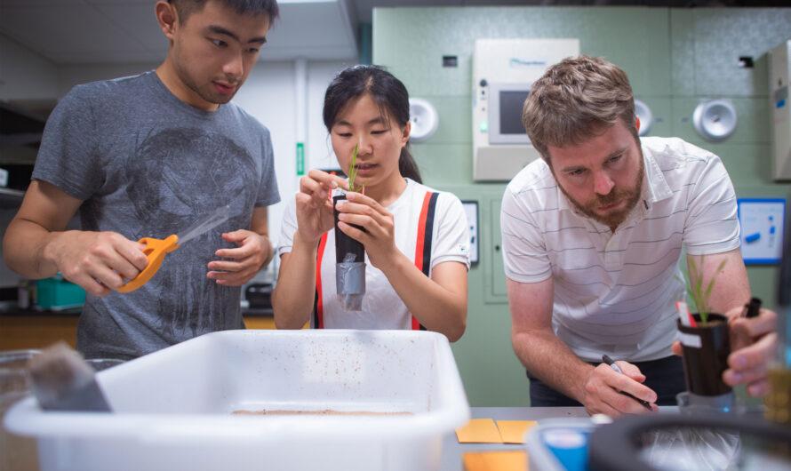 El potencial catalizador de las subvenciones semilla J-WAFS | Noticias del MIT